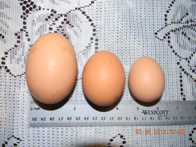 81069_eggs_002.jpg