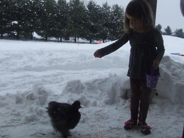 http://www.backyardchickens.com/forum/uploads/81690_dscf9542.jpg