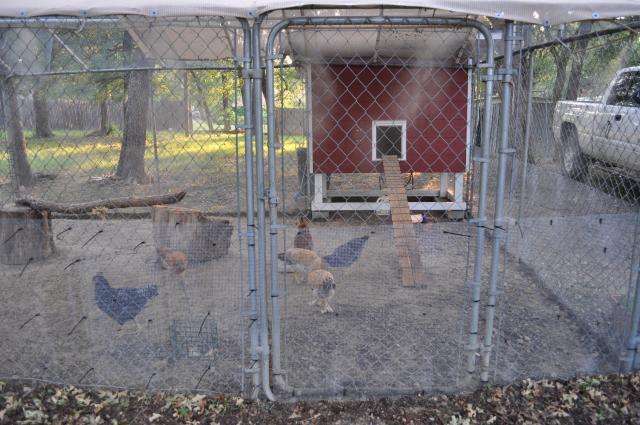 http://www.backyardchickens.com/forum/uploads/82702_dsc_0010.jpg
