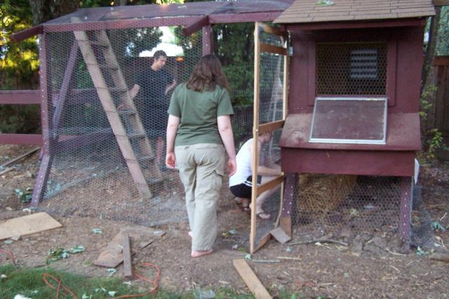 The first coop and henhouse made from the kids old play structure