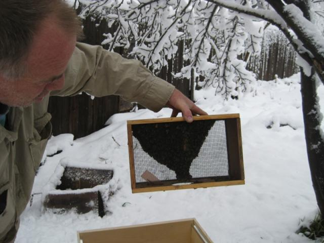 Tom working on beehive