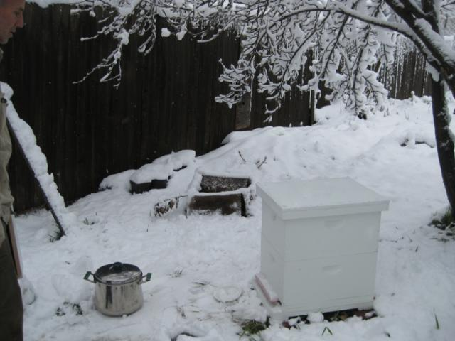 Our new beehive
