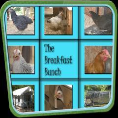 84132_breakfast_bunch.jpg