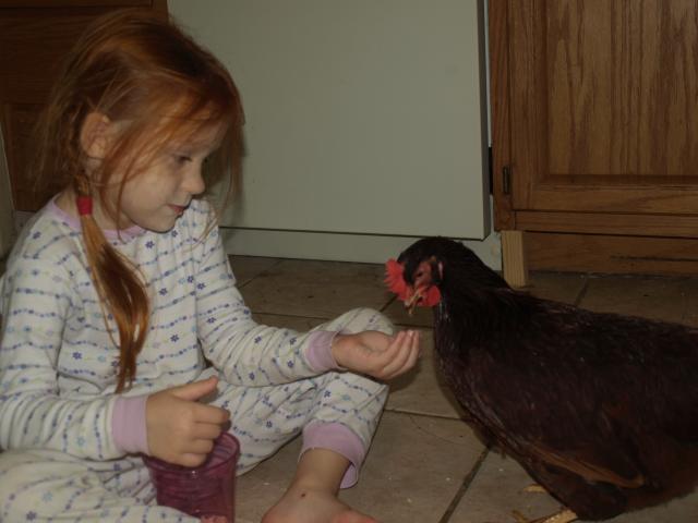 84222_chickens_041.jpg