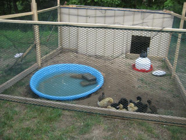 1000 Ideas About Duck Pens On Pinterest Duck House