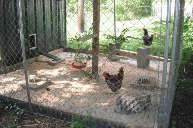 http://www.backyardchickens.com/forum/uploads/85907_run.jpg