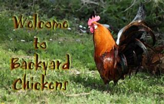 86051_rooster_watercolor_welcome.jpg