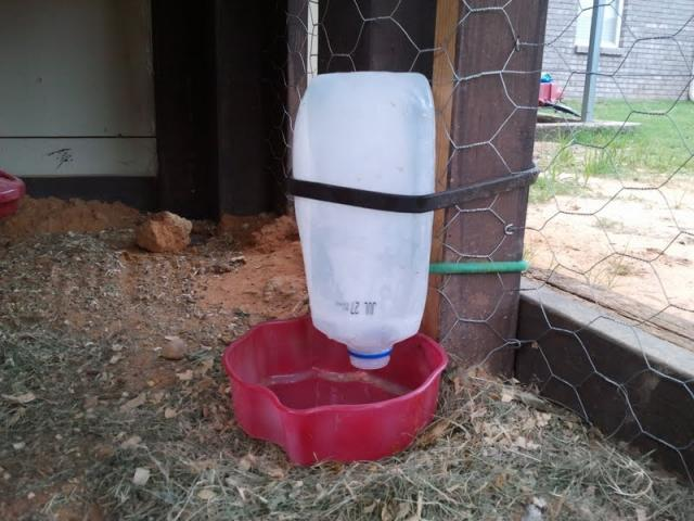 Frozen Chicken Waterer Backyard Chickens