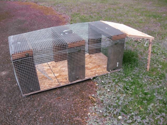 Home Made Traps Update Need Ideas For Second Trap