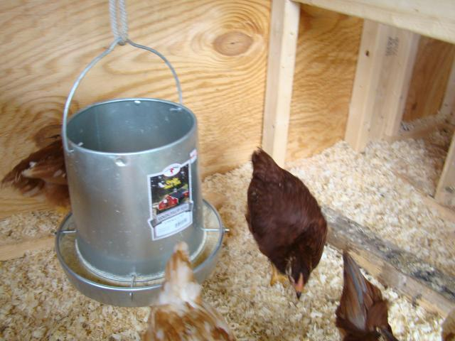 http://www.backyardchickens.com/forum/uploads/87705_dsc06099.jpg