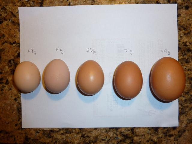 88260 egg sizes