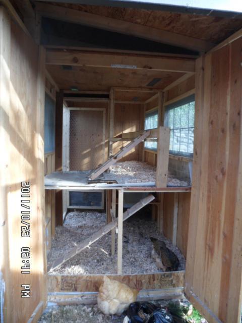 Hmmcc123 S Chicken Coop Backyard Chickens Community