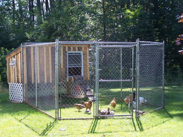 http://www.backyardchickens.com/forum/uploads/89740_100_2555.jpg