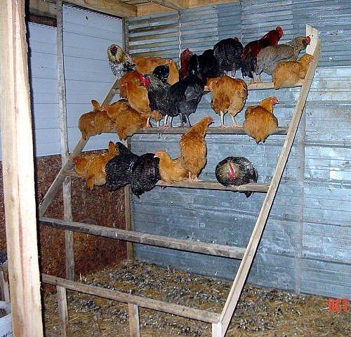 Chicken coop roosts - photo#3