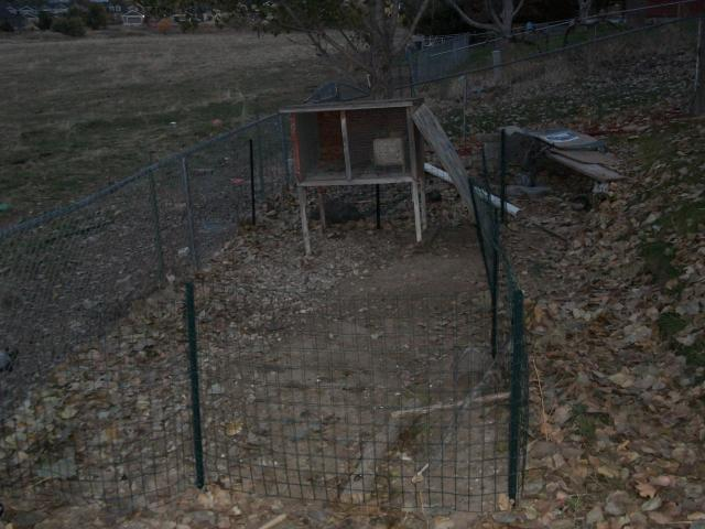 The Ruins of the Chicken Ghetto