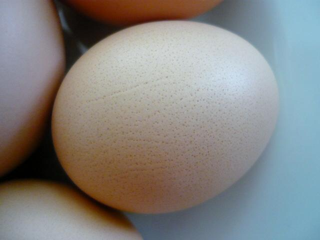 Interesting speckled eggs from my Australorp Hybrids!