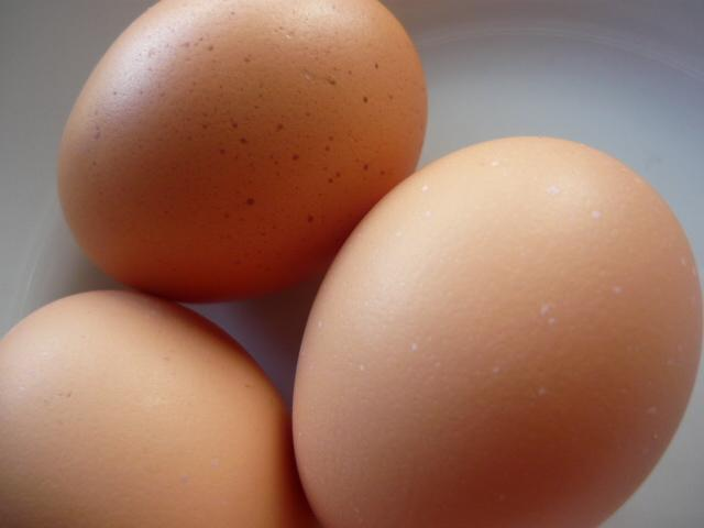 Australorp chickens eggs