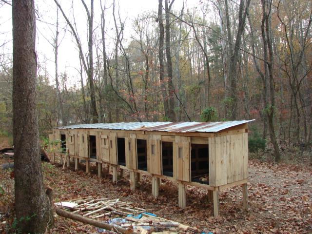http://www.backyardchickens.com/forum/uploads/92428_dsc03878.jpg