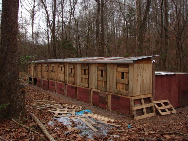 http://www.backyardchickens.com/forum/uploads/92428_dsc03985.jpg