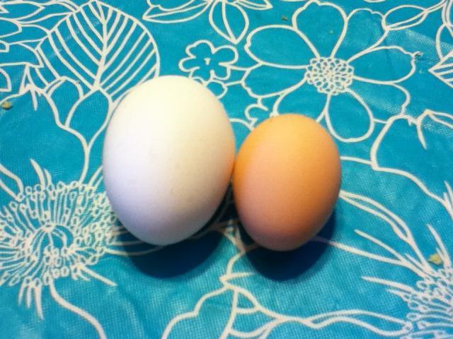 92455_2nd_egg_9-6-11_047.jpg