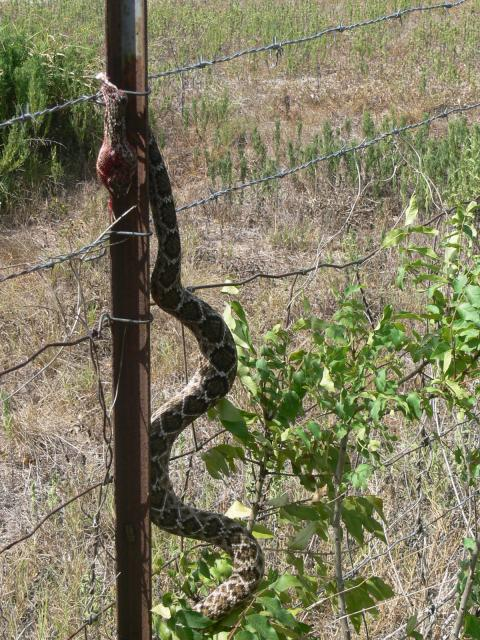 how to keep snakes out of hoophouse
