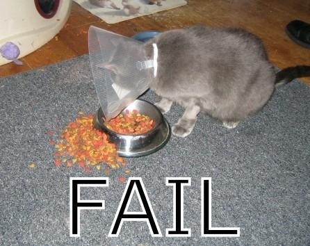 http://www.backyardchickens.com/forum/uploads/9280_cat_fails_miserably.jpg