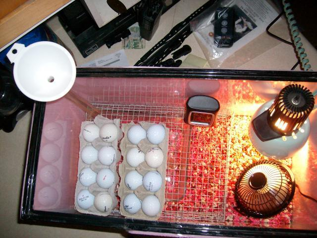 egg incubator design and assembly pdf