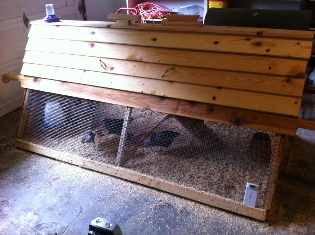 Chickens in the chicken tractor in the garage.