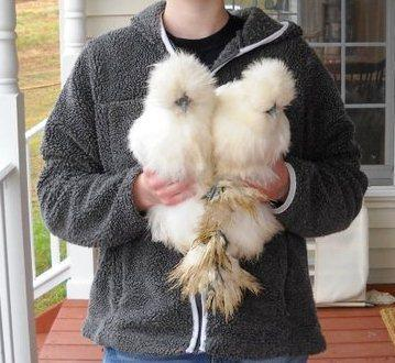 http://www.backyardchickens.com/forum/uploads/95298_76828_1591937090324_1592812720_1378149_485495_n1.jpg