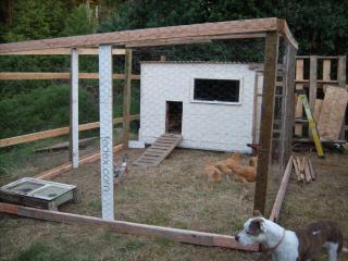 http://www.backyardchickens.com/forum/uploads/95961_gedc0609.jpg