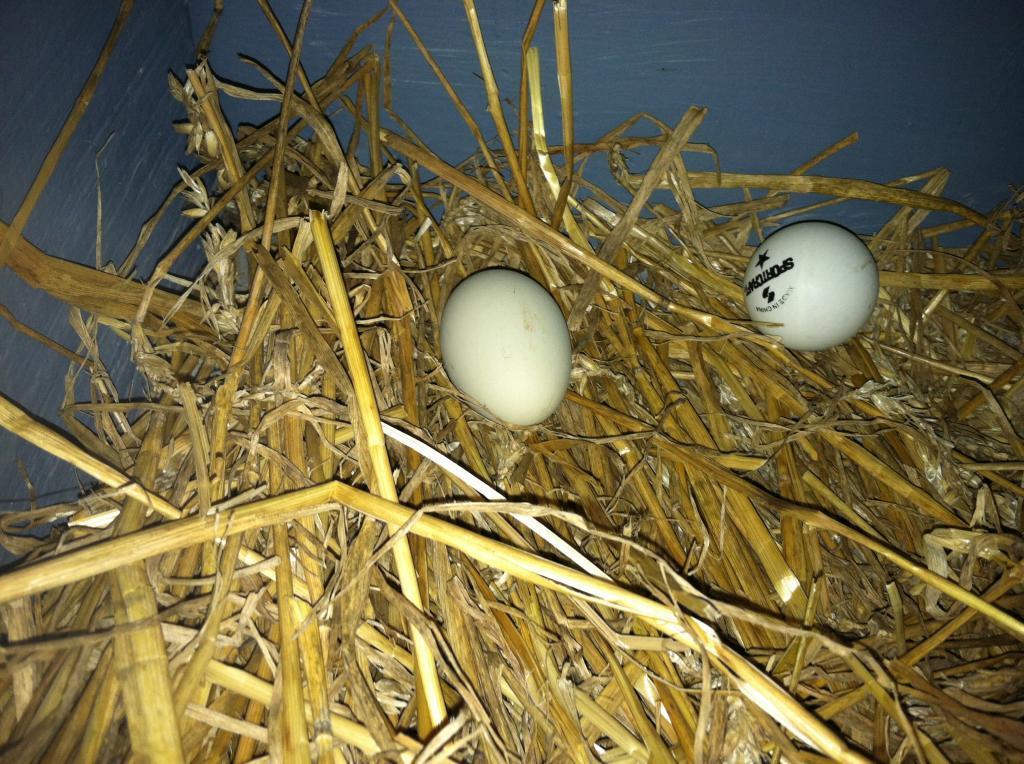 97463_new_years_eve_egg_2011_011.jpg