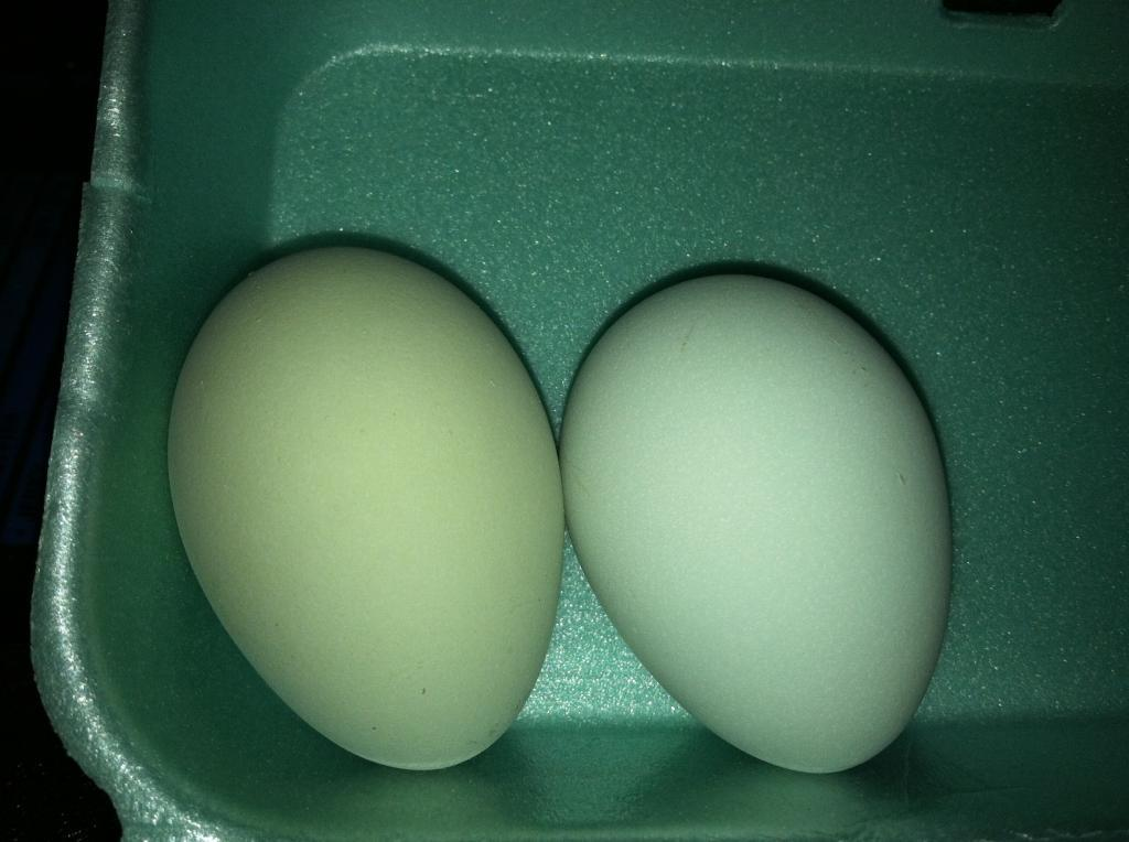 http://www.backyardchickens.com/forum/uploads/97463_smokey_green_blue_egg_001.jpg