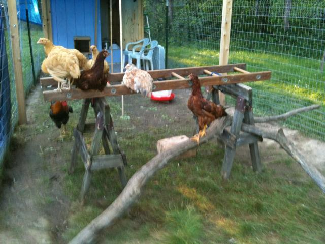 http://www.backyardchickens.com/forum/uploads/97798_photo.jpg