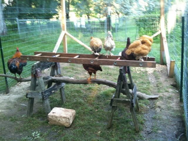 http://www.backyardchickens.com/forum/uploads/97798_photo1.jpg
