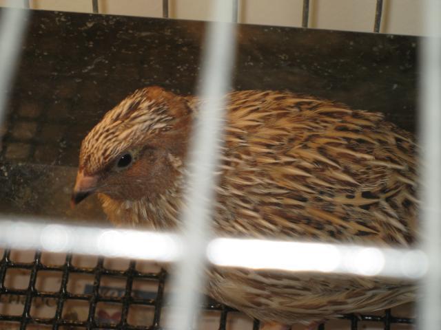 http://www.backyardchickens.com/forum/uploads/98042_img_3673.jpg