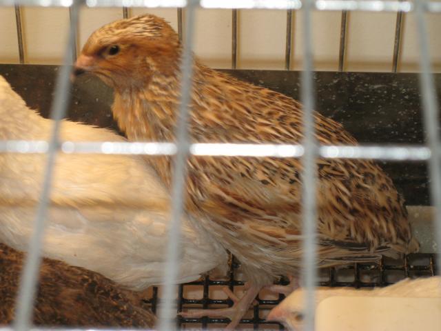 http://www.backyardchickens.com/forum/uploads/98042_img_3675.jpg