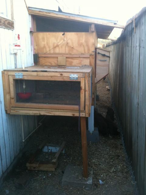 http://www.backyardchickens.com/forum/uploads/98066_6c.jpg