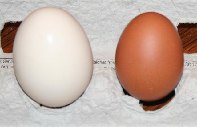 98426_first_egg.jpg