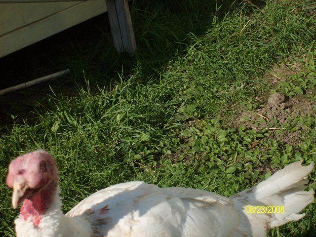 http://www.backyardchickens.com/forum/uploads/9847_sany0671.jpg