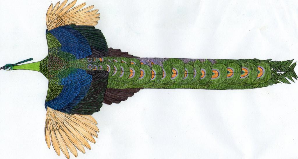 http://www.backyardchickens.com/forum/uploads/98483_img105.jpg