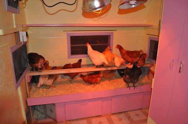 http://www.backyardchickens.com/forum/uploads/98950_cluckingham_palace_021.jpg