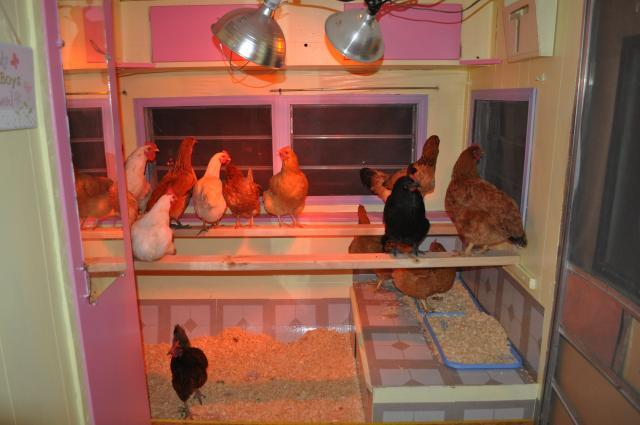 http://www.backyardchickens.com/forum/uploads/98950_cluckingham_palace_023.jpg