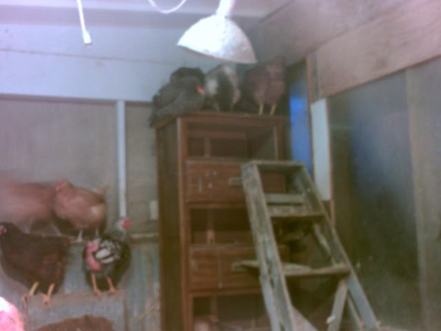 http://www.backyardchickens.com/forum/uploads/99683_coolest_nest_box_ever.jpg