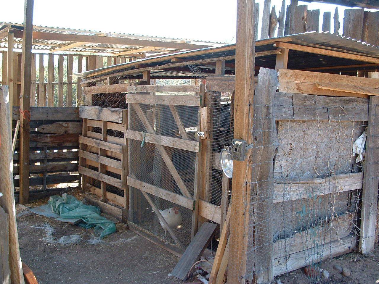 coop area made out of scrap wood. The run made mostly out of pallets and scrap wood and metal roofing.