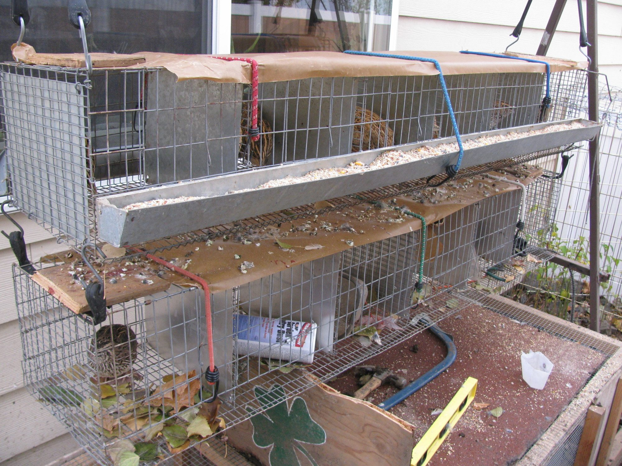 quails cage - photo #34