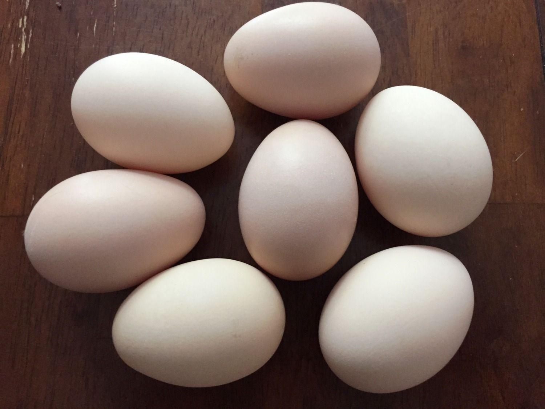 buff-orp-eggs.jpg