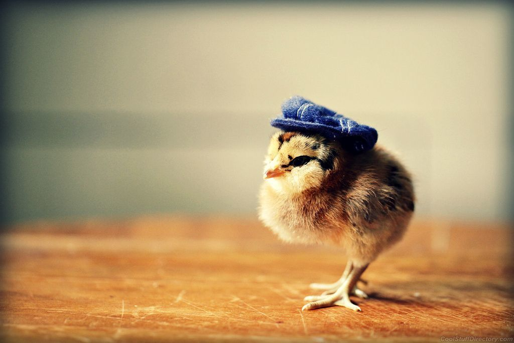 chick with hat blue.jpg