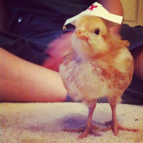 nurse chick.png