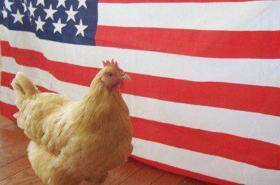mae_pouletfacebook.jpg