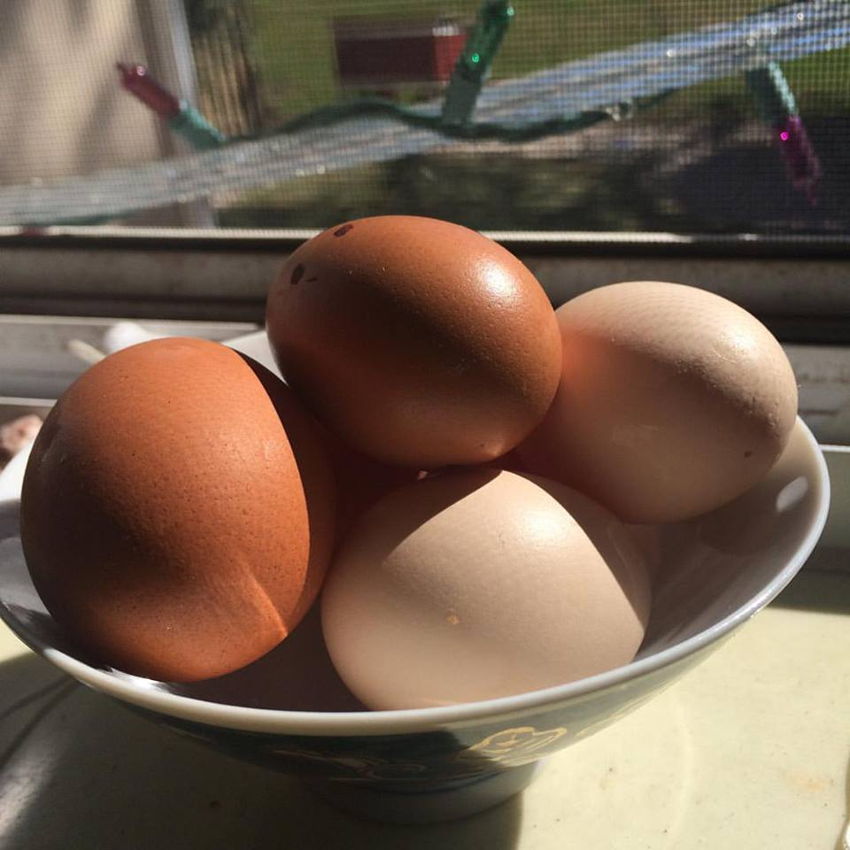 Several of my first pullet eggs with the coop in the background. :)  Chicken eggs.jpg